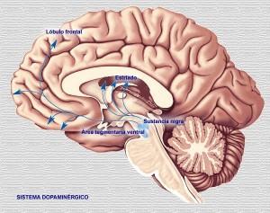 cerebro-detalles